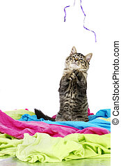 Kitten playing with string - Funny and cute grey tabby...