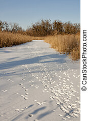 Animal tracks on winter river - Winter landscape, frozen...