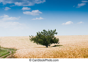 Beautiful rural landscape with tree