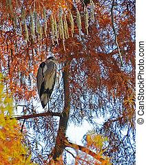 Olbrzym, Pora, czapla, drzewo, jesień, liście, Mimika