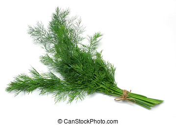 Herb Series Dill - Fresh Dill herb tied in a bunch, isolated...