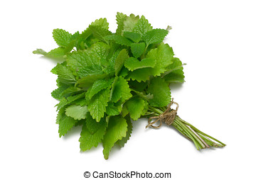 Herb Series Lemon Balm - Lemon Balm (herb) tied in a bunch...