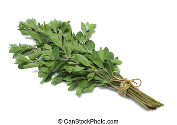 Herb Series Marjoram - Sweet Marjoram herb tied in a bunch...