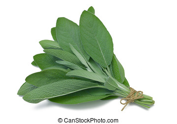 Herb Series Sage - Sage herb tied in a bunch with twine,...