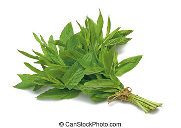 Herb Series Spearmint - Spearmint herb tied in a bunch with...