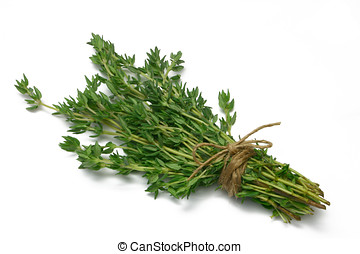 Herb Series Thyme - Thyme (herb) tied in a bunch with twine,...