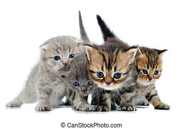 group of little kittens - group of small 3 weeks old kittens...