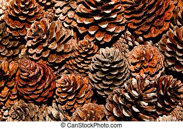 The Pine cone
