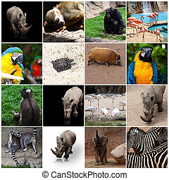 zoo animal composition