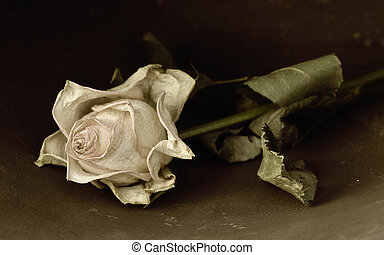 Mourning - Dried Rose in sepia colors on dark background