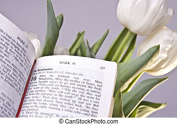 Easter Bible Verse and Tulips - The bible open to a passage...