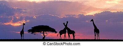 長頸鹿, 地平線