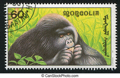 gorilla - MONGOLIA - CIRCA 1991: stamp printed by Mongolia,...