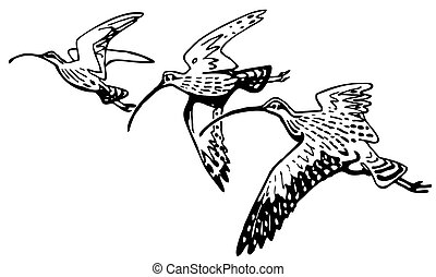 Curlew Sandpipers flying