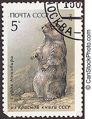 USSR - CIRCA 1987: A stamp printed in the USSR shows marmot....