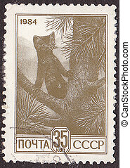 USSR - CIRCA 1984: A stamp printed in the USSR shows marten....