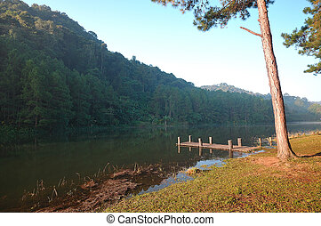 A pine forrest and lake taken in the morning at thailand