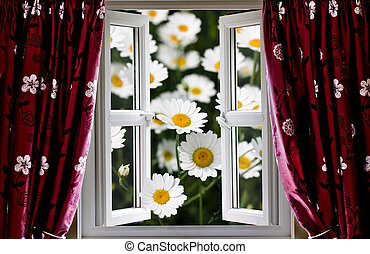 Open windows onto large daisies