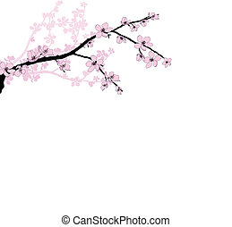 Branch of beautiful cherry blossom - Branch of beautiful...