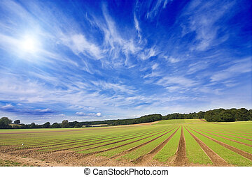 Farmland furrows landscape - Farmland furrows in perspective...