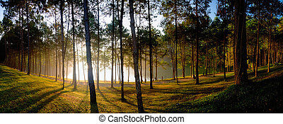 pine forest national park