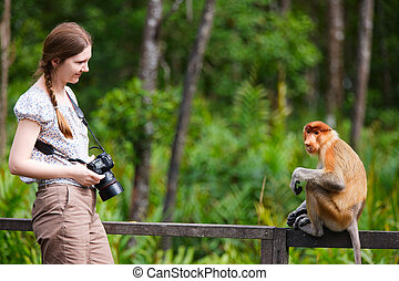 Female photographer and proboscis monkey on Borneo island in...