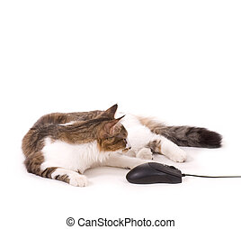 Beautiful cat with computer mouse