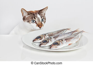 A hungry cat looking at fish in the kitchen