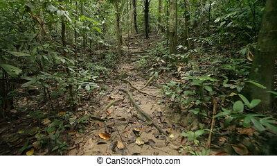walking in jungle
