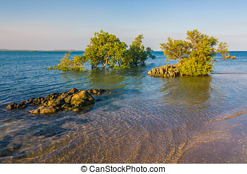 Baie du Courrier - Mangrove in the Antsiranana bay Diego...