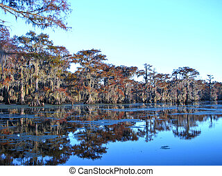 Pine trees by the swamp.