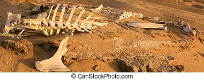 Remains of a Camel - Skeleton of a camel in an Arab desert