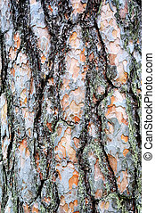 texture of a bark of a tree - texture of a bark of an old...