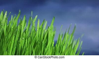Gras - Close-up of green grass