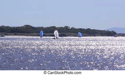 Sails On Dazzling Water - Sails of yachts with sparkling...