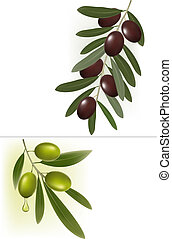 Background with green olives. illustration.