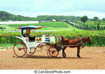 Horse Carriage and Garden
