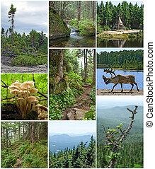 verano, belleza, canadiense, bosques