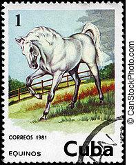CUBA - CIRCA 1981 Horse 1c - CUBA - CIRCA 1981: A Stamp...