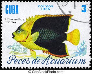 CUBA - CIRCA 1985 Holacanthus tricolor - CUBA - CIRCA 1985:...