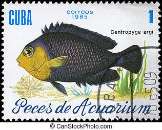 CUBA - CIRCA 1985 Centropyge Argi - CUBA - CIRCA 1985: A...