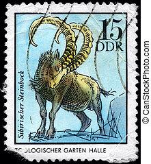 GDR - CIRCA 1975 Chamois - GDR - CIRCA 1975: A Stamp printed...