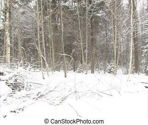 granulate branch winter