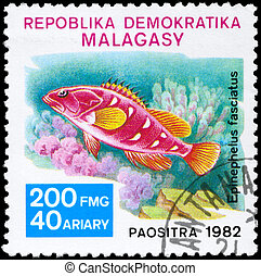 MALAGASY - CIRCA 1982 Grouper - MALAGASY - CIRCA 1982: A...