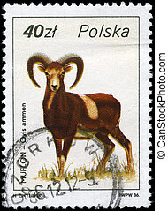 POLAND - CIRCA 1986 Argali - POLAND - CIRCA 1986: A Stamp...