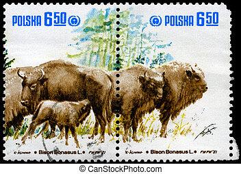POLAND - CIRCA 1981 Wild Bison - POLAND - CIRCA 1981: A...