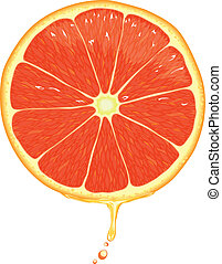 Grapefruit Slice - Vector - Illustration of a grapefruit...