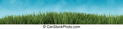 Green Grass isolated on blue sky