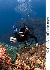 Scuba Diver Photographing the Coral in Hawaii
