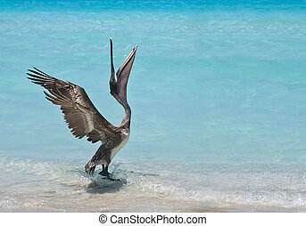 A pelican stretches and dances in the sunlight.